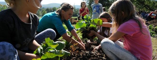 Školní zahrady / School Gardens